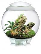 biOrb Nano-Terrarium AIR 60 für Tropenpflanzen weiß