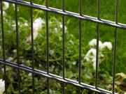 Peddy Shield Gartenzaun Doppelstabmattenset ohne Pfosten, anthrazit (RAL7016) 3 Stück, Höhe 83cm