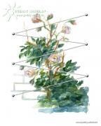 Peddy Shield Rankhilfe Edelstahl - Kletterhilfe für Kletterpflanzen und Rosen